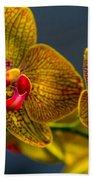 Orchid Color Beach Towel