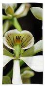 Orchid Encyclia Fragrans Beach Towel
