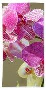Orchid Flowers Art Prints Pink Orchids Beach Towel