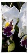 Orchid Laeliocattleya Lucie Hausermann With Buds 4074 Beach Towel