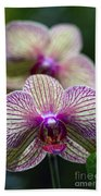 Orchid One Beach Towel
