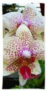 Orchid Series 5 Beach Towel