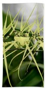 Orchid Spikes Beach Towel