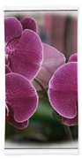 Orchid Trio Beach Towel