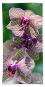 Orchid Two Beach Towel