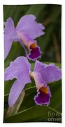 Orchids Pictures 1 Beach Towel