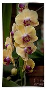 Orchids Pictures 10 Beach Towel