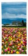 Oregon Tulip Farm - Willamette Valley Beach Towel