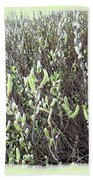 Oregon Willow Catkins Beach Towel