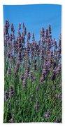 Organic Lavender Beach Towel