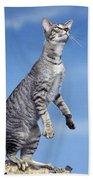 Oriental Cat Beach Towel
