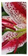 Oriental Hybrid Lily Named Dizzy Beach Towel