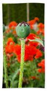 Oriental Poppy Seed Pod Beach Towel