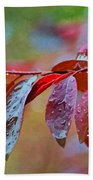 Ornamental Plum Tree Leaves With Raindrops - Digital Paint Beach Towel