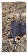 Oryx Long Horned Antelope Beach Towel