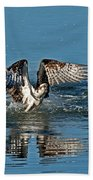 Osprey Getting Out Of The Water Beach Towel