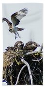 Osprey In Flight Over Nest Beach Towel