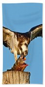 Osprey With Spotted Bass Beach Towel