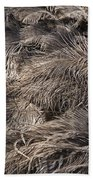 Ostrich Feathers  Beach Towel