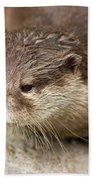 Otter Closeup Beach Towel