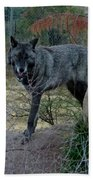 Out Of Africa Black Wolf Beach Towel