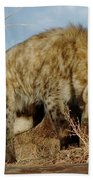 Out Of Africa Hyena 1 Beach Towel