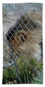 Out Of Africa Lions 4 Beach Towel