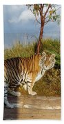 Out Of Africa  Tiger 1 Beach Towel