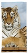 Out Of Africa Tiger 3 Beach Towel