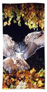 Owl About To Land Beach Towel by Manfred Danegger