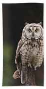 Owl In The Forest Visits Beach Towel