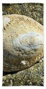 Owl Limpet Beach Towel