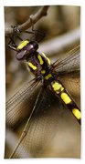 Pacific Spiketail Dragonfly On Mt Tamalpais 2 Beach Towel