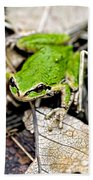 Pacific Tree Frog 2a Beach Towel