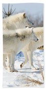 Pack Of Arctic Wolves Beach Towel