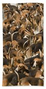 Pack Of Hound Dogs Beach Towel