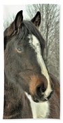 Paint Horse In Winter Beach Towel