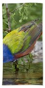 Painted Bunting Beach Towel