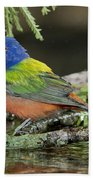 Painted Bunting Drinking Beach Towel