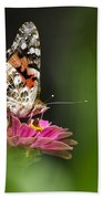 Painted Lady Butterfly At Rest Beach Towel by Christina Rollo