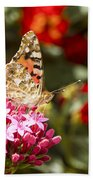 Painted Lady Butterfly Beach Towel by Eyal Bartov