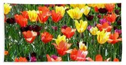 Painted Sunlit Tulips Beach Towel