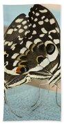 Pair Of Citrus Swallowtail Butterflies  Beach Sheet