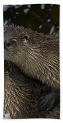 Pair Of River Otters   #1301 Beach Sheet