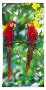 Pair Of Scarlet Macaws Beach Sheet