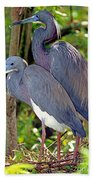 Pair Of Tricolored Heron At Nest Beach Towel