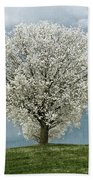 Pale White Tree On Cloudy Spring Day E83 Beach Towel