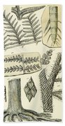 Paleozoic Flora, Calamites, Illustration Beach Towel