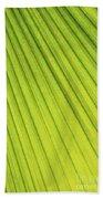 Palm Tree Leaf Abstract Beach Towel