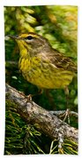 Palm Warbler Pictures 38 Beach Towel